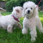 Cheri und Maurice (2)